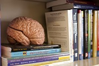 Psychology (Books & Brain on Shelf)