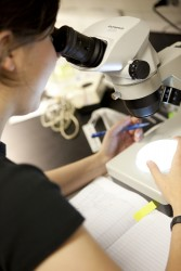 Biology student using microscope
